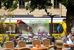 Straßenbahn, Tram, 18/1, Traffic Board, Kampagnenwerbung, Außenwerbung